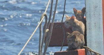 Teknede mahsur kalan 4 kediyi sırtında taşıyarak kurtardı