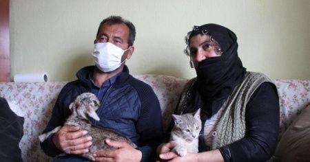 Bingöl'de içleri ısıtan görüntü, oğlağı evde bebek gibi bakıyorlar