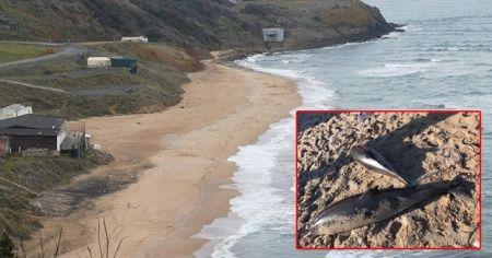 Riva'da iki ölü yunus karaya vurdu