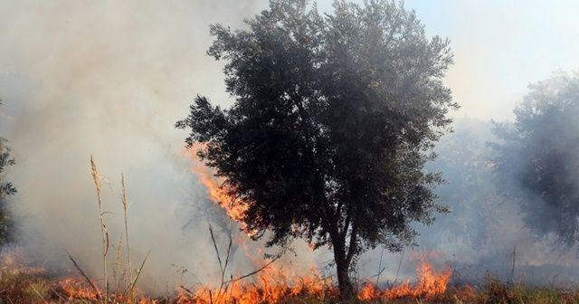 Filistinlilere ait onlarca zeytin ağacını ateşe verdiler