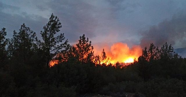 Muğla'da çıkan orman yangınlarına müdahale ediliyor