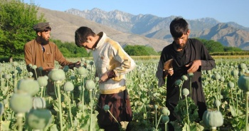 Afgan halkı uyuşturucu tüketimindeki artışı ABD ve NATO'ya bağlıyor