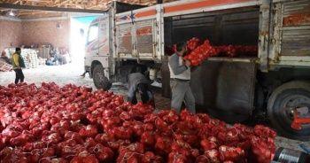 Çorum'da TMO çiftçilerden soğan alımına başladı