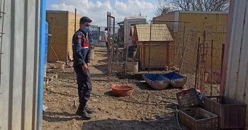 Kocaeli'de sağlıksız ortamda bakılan 80 köpek korumaya alındı