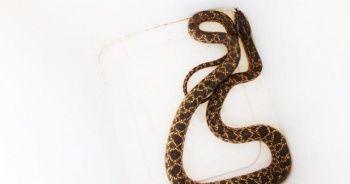 Otomobil içindeki yılan doğaya bırakıldı