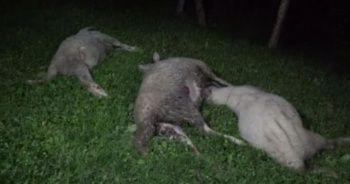Siyanürle hayvanları telef eden sanıklara hapis cezası