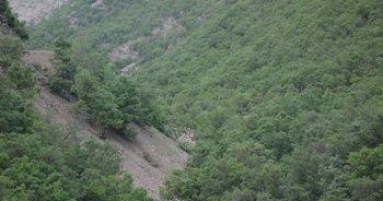 Şırnak'ta karlar eridi doğa yeşile büründü