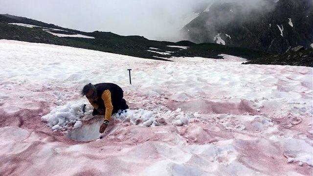 Alp Dağları'ndaki 'kırmızı kar'ın nedeni ortaya çıktı