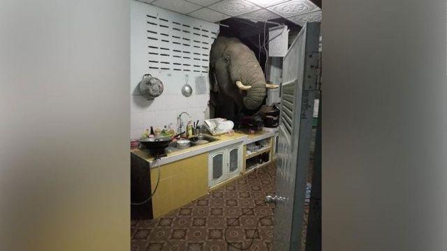 Gece yarısı beklenmedik ziyaretçi! Fil eve çarptı duvarı yıktı