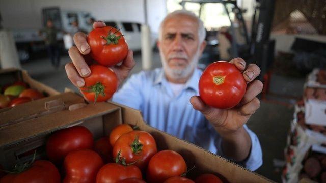 İsrail'in yeni güvenlik tehdidi: Domates sapı