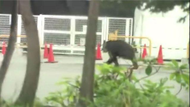 Japonya'da şehre inen ayı korku saçtı! 4 kişi yaralandı