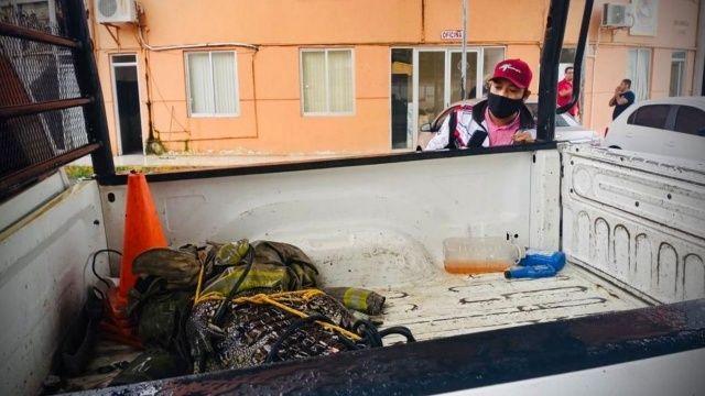 Meksika'nın turistik kenti Acapulco'da 2.5 metrelik timsah paniğe neden oldu