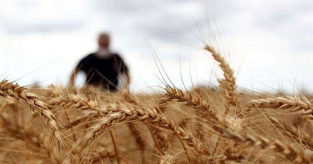 Rusya'yı buğdayda şahlandıran Türk: Prof. Dr. Hamit Köksel