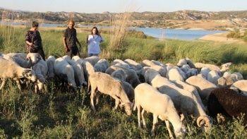 Birleşmiş Milletler gibi aile: Diğer çobanlardan çok farklı