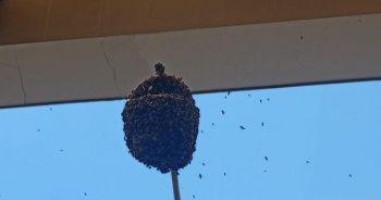Hastaneyi arılar bastı