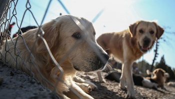 Hayvan Hakları Yasası Meclis'e geliyor