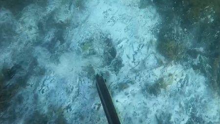 Müsilajın deniz altındaki tahribatı görüntülendi