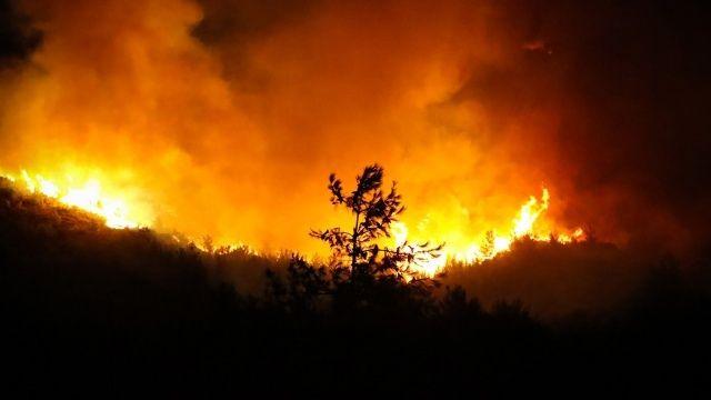 'Yeşil vatan' alevler içinde: Türkiye'deki orman yangınlarında son durum