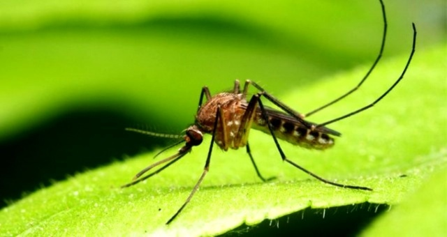 Covid-19'dan sonra en büyük tehlike: Virüs saçıyorlar