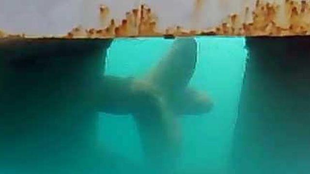 Denize düştü, teknenin pervanesine çarptı! Feci ölüm