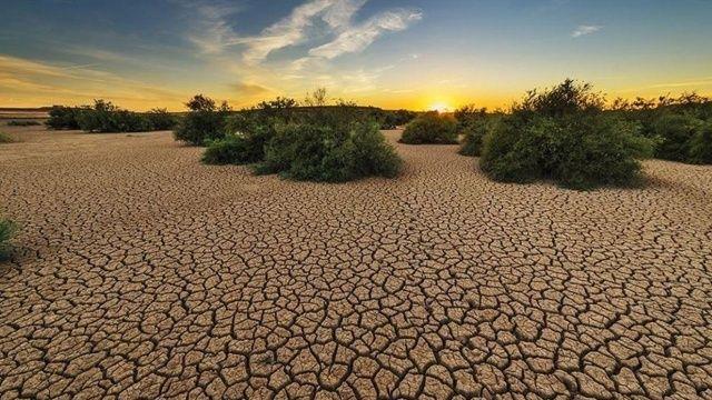Kanada'da aşırı sıcaklar nedeniyle tarımsal afet yaşanıyor
