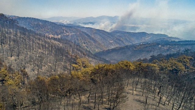 Türkiye yanan ormanların yeşermesi için tek yürek oldu