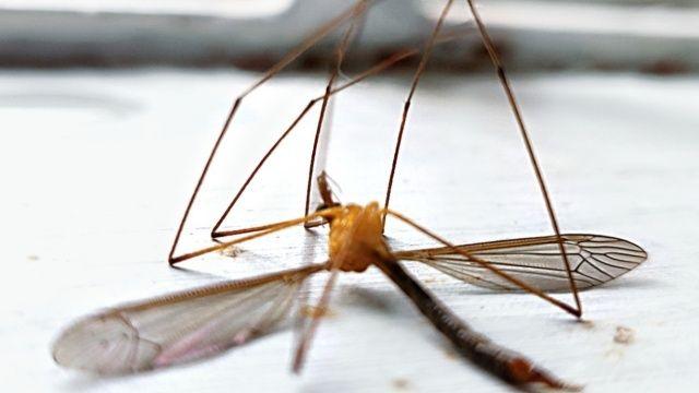 Yazın çilesi: Sivrisinek! Sivrisinekten korunmanın yolları nelerdir?