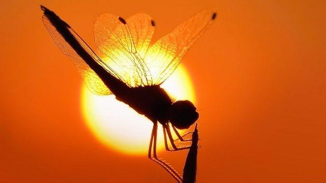 Asya Kaplan ısırığı belirtileri neler? Zehirli sivrisinekten nasıl korunur?