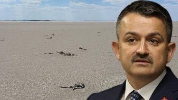 Bakan Pakdemirli'den Tuz Gölü'ndeki flamingo ölümlerine ilişkin açıklama