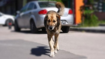 Danıştay'dan sokak köpekleri kararı