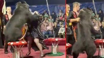 Dehşet anları: Rus sirkinde ayı eğitmenine saldırdı