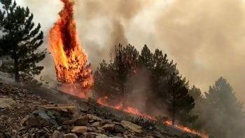 Elazığ'da korkutan orman yangını: Çok sayıda ekip sevk edildi