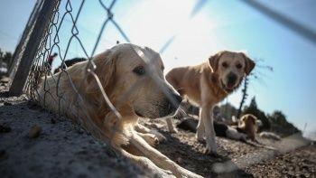Hayvanları Koruma Kanun Teklifi meclise sunuldu
