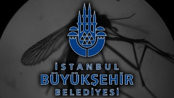 İBB mesajla uyardı: İstanbul'da sivrisinek kabusu