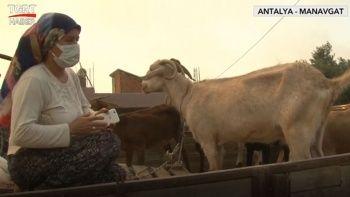 Manavgat'taki orman yangını: Ayşe teyze gözyaşları içerisinde yaşananları anlattı