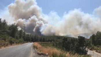 Milas'ta orman yangını: Çok sayıda ekip sevk edildi