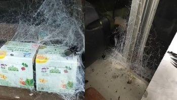 Örümcek besleyen kadının evinin hali korkunç her yeri ağ sardı
