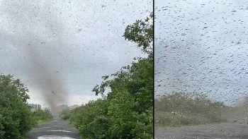 Rusya'da sivrisinek kasırgası! Güneşi bile engelliyor