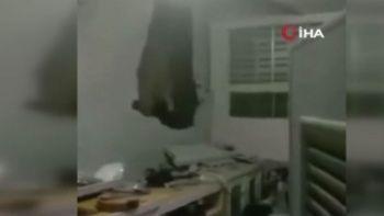 Tayland'da acıkan fil evin mutfağını bastı