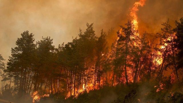 Orman yangınlarında son durum: 140 noktada alevler kontrol altında