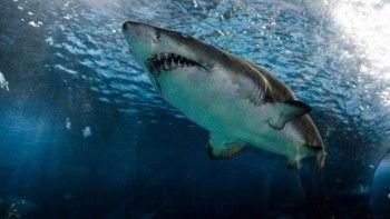 12 yaşındaki çocuk köpekbalığı saldırısından ucuz kurtuldu!