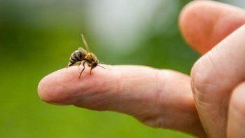 Arının soktuğu gençten acı haber!