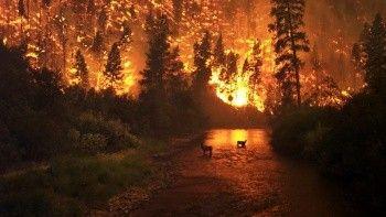 Yangınlar Avrupa'nın haritasını değiştirdi, 3 ülke liste başı