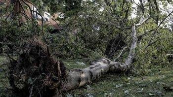 Bankta oturanların üstüne ağaç devrildi