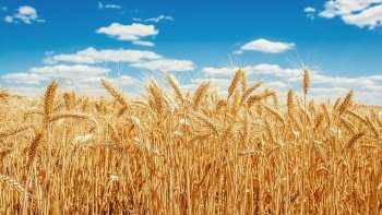 FAO Başkan Yardımcısı Dr. Selışık'den kuraklık uyarısı