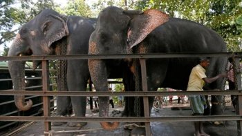 Filler için kanun çıkarıldı: 4 saatten fazla çalışmayacaklar