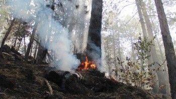 İletişim Başkanlığı: 220 orman yangını kontrol altında