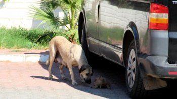 İnsanlıktan utandıran olay: 5 yavru köpeği döverek ve yakarak öldürmüşler