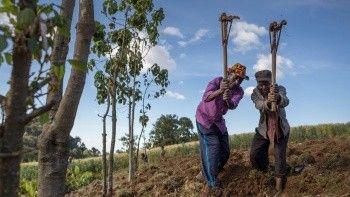 Küresel gıda fiyatlarında ikinci ayda da gerileme
