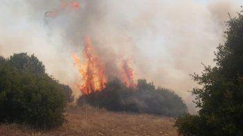 Manisa'da orman yangını başladı!